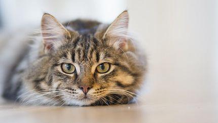 cat-1686730_640