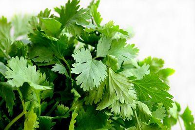 coriander-nutrition